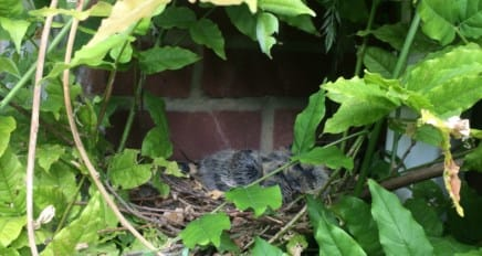 Wisteria n Chicks