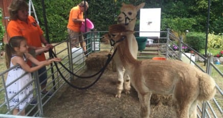 Summer Fete August 8th: guess the name of the Alpaca